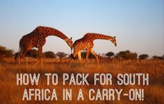 travel tips: safari + cape town + 2 weeks = carry-on! South Africa Safari, Cape Town South Africa, Packing Tips For Travel, Travel Hacks, To Infinity And Beyond, Africa Travel, Travel Europe, Roadtrip, African Safari