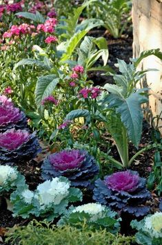 Potager garden 308848486945633589 - Aside from the spectacular beauty of ornamental kale, the plants don't require pinching, pruning or staking, which should be appealing to most gardeners. Potager Garden, Diy Garden, Edible Garden, Dream Garden, Herb Garden, Garden Landscaping, Fruit Garden, Landscaping Ideas, Beautiful Gardens