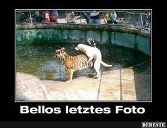 Bellos letzes Foto | Lustige Bilder, Sprüche, Witze, echt lustig