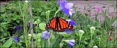 Create a Monarch Way Station