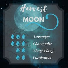 This harvest moon diffuser blend will have you howling! This moonlight combination of lavender, chamomile, eucalyptus and ylan ylang essential oils is tantalizing. This is a perfect fall or Halloween time diffuser blend. Helichrysum Essential Oil, Essential Oils For Colds, Chamomile Essential Oil, Essential Oil Diffuser Blends, Pure Essential, Healing Oils, Aromatherapy Oils, Harvest Moon, Essential Oil Combinations
