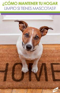 No sufras más, puedes solucionarlo muy fácil #mascotas #tips #hogar #home
