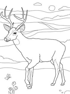 41d2f7afb31f5ea9d973b718f4f1d4ba adult coloring pages free coloring