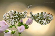 Papillons <3