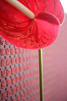 flower Interior Design Principles, Asian Interior Design, Hotel Spa, Flower, Flowers