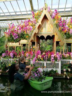 Orchids at Kew Gardens' Orchid Festival 2018 - Pumpkin Beth Botanical Art, Botanical Gardens, Phalaenopsis Orchid, Kew Gardens, Colorful Garden, Colour Combinations, Cut Flowers, Surrey, Installation Art