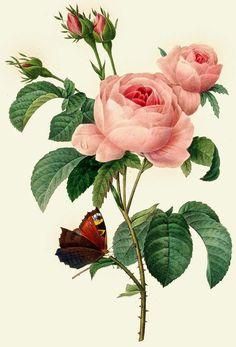 "$2.99 - Waterslide Decals (4Pcs 2.5""X3.5""Each) Roses Butterflyflonz 0722 Vintage Flowers #ebay #Home & Garden"