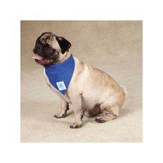 Guardian Gear Cool Pup Dog Bandana at BaxterBoo Dog Cooling Mat, Dog Travel Accessories, Cool Bandanas, Aqua, Dog Branding, Dog Items, Love Pet, Dog Design, Pet Care