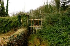 0vergrown garden with a charming old gate