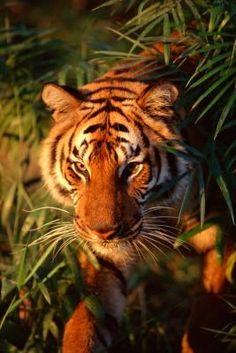 How to Build a Tiger Habitat Diorama