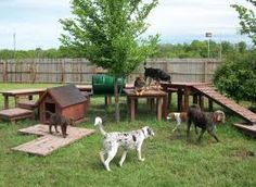 jungle gym for dogs.Dog yard