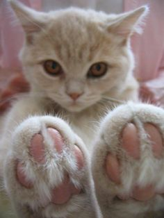 sweet paws