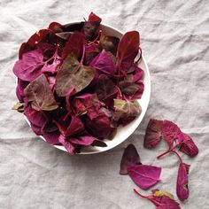 Playing with heirloom red spinach...what? How am I just hearing about this beautiful green/not-so green? Have you all used this before? | with McKel of Nutrition Stripped