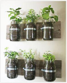 Repurposed Glass Jars make a great herb garden! http://www.myhomerocks.com/2012/03/indoor-herb-gardens-and-salad-walls/