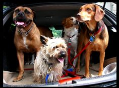 Traveling dogs ~