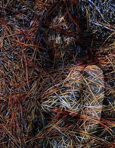 "Saatchi Art Artist Zbigniew Fitz; New Media, ""Organic Nude"" #art"