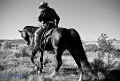 """""""When you reach for your horse, does he reach for you?"""" - Buck Brannaman."""