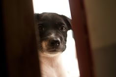 wikiHow to Train or Help a Puppy Stop Crying when Locked up or Outside -- via wikiHow.com