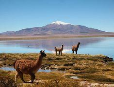 Tem como não amar?  Estamos no Atacama um lugar extremo lindo e surreal!  Ontem fizemos o passeio Salar de Tara com a empresa @aylluatacama  O tour foi mega vip com apenas 6 pessoas salmão com purê de batatas e salada além de um guia muito simpático e divertido.  Filmamos tudo com a internet da @mysimtravel . Corre que ainda está tudo no Stories!  #licancabur #atacamadesert #atacama #aylluatacama #ayllu #chile #visitchile #visitechile #pegadasnochile #missaovt #sourbbv #viagem #gratidao…