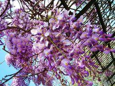 Purple Vine By Kristine Euler