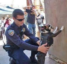 """grappige dierenfoto""""s - Google zoeken"""