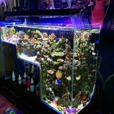 diy aquarium furniture stands are an integral part of every aquatic system. The aquarium stand should be sturdy so that it can bear the weight of a filled a Aquarium Terrarium, Aquarium Aquascape, Diy Aquarium, Aquarium Design, Aquarium Marin, 55 Gallon Aquarium, Marine Aquarium, Aquarium Fish Tank, Aquarium Stand