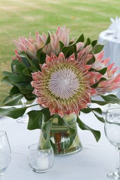 King Pink Protea for wedding flower decoration. Inspiration and ideas for wedding and bridal flowers. Proteas are a great flower to include in your bridal bouquet and centerpieces. Protea Wedding, Wedding Table Flowers, Bridal Flowers, Floral Wedding, Wedding Bouquets, Protea Centerpiece, Tropical Centerpieces, Wedding Centerpieces, Wedding Decorations