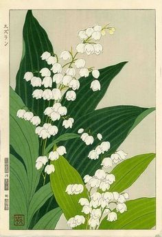 Lily of the Valley - woodblock print 1954 - Kawarazaki Shodo Japan) Art And Illustration, Art Floral, Japanese Plants, Impressions Botaniques, Illustration Botanique, Historia Natural, Art Asiatique, Japanese Painting, Japanese Artwork