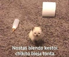 Memes Estúpidos, Cute Memes, Stupid Memes, Funny Memes, Weird Pictures, Reaction Pictures, Crazy Pictures, Foto Meme, Strange Photos