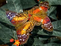 Imágen mariposa 030812