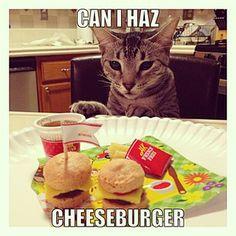 Nylah want some Cheeseburger that Jeana made.  #NylahKitty #youtube