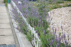 お花たち(2015年5月) Sidewalk, Plants, Side Walkway, Walkway, Plant, Walkways, Planets, Pavement