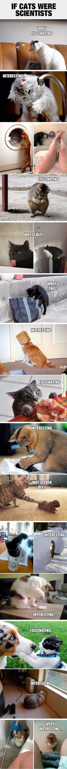 Funny Cats Investigating
