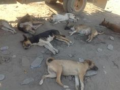 They are sleeping well, but are in risk National Geographic Photos, Your Shot, Amazing Photography, Places To Visit, Animals, Animales, Animaux, Animal, Animais