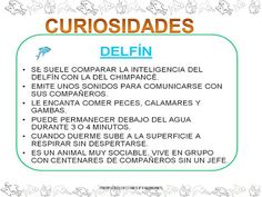 PROYECTO DELFINES - isabel belda martinez - Álbumes web de Picasa Album, Bee, Whales, Dolphins, Picasa, Projects, Card Book