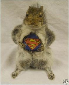 A Gallery of Badly Stuffed Animals