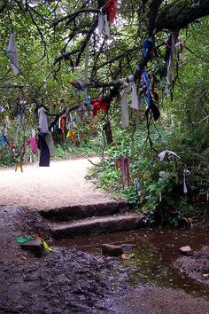 """An Imbolc tradition is that of visiting clootie wells. Clootie wells (also Cloutie or Cloughtie wells) are places of pilgrimage in Celtic areas. They are wells or springs, almost always with a tree growing beside them, where strips of cloth or rags have been left, usually tied to the branches of the tree as part of a healing ritual. In Scots nomenclature, a """"clootie"""" or """"cloot"""" is a strip of cloth or rag."""