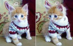 Cat Sweater Patterns