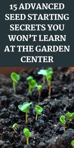 Garden Yard Ideas, Veg Garden, Diy Garden Projects, Garden Care, Garden Beds, Garden Plants, Growing Veggies, Growing Herbs, Gardening For Beginners