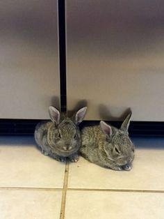 Warm under the fridge <3