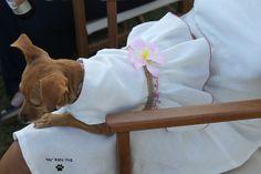 Princesa luce un vestido para mascotas diseñado para ver el partido de Polo en el club de Sotogrande.