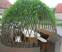 Willow trees - forced to grow as we want = wind shelter for fire place Lawn And Garden, Garden Art, Garden Design, Garden Igloo, California Decor, Interior Garden, Garden Structures, Dream Garden, Garden Planning