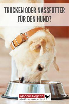 Hundebesitzer wollen ja immer das Beste für ihren vierbeinigen Liebling. Sie sind sich in den meisten Fällen durchaus auch bewusst, dass die Ernährung eine ganz besonders wichtige Rolle für die Gesundheit des geliebten Hundes spielt. Allerdings scheiden sich seit vielen Jahren die Geister schon alleine an der Frage, ob der Hund nun besser Trockenfutter oder doch lieber Nassfutter bekommen sollte. Darüber erfährst du mehr in unserem heutigen Beitrag. #hunde #hundefutter #hundehaltung…