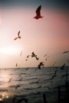 hellanne:  seagulls (by Kawee.Meksongruek)