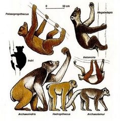 Primates, Mammals, Giant Animals, Animals And Pets, Dinosaur Era, Creature Drawings, Extinct Animals, Prehistoric Creatures, African Animals
