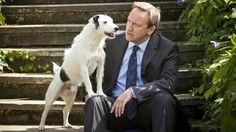 Sykes en Barnaby in seizoen 14 van Midsomer Murders. #dog #jack #russell