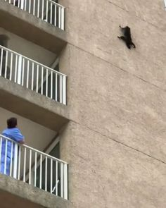 Black cat jumps of building Funny Animal Memes, Cute Funny Animals, Funny Animal Pictures, Cute Baby Animals, Cute Cats, Funny Cats, Nature Animals, Animals And Pets, Funny Vid