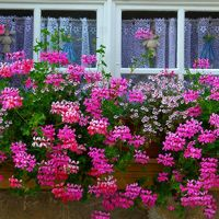 Consider bringing a little curb appeal to your home with a bright, inviting window box full of fresh flowers. Growing Flowers, Fresh Flowers, Front Porch Flowers, House Front, Flower Decorations, Curb Appeal, Bloom, Windows, Plants