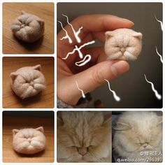 needle felting exotic shorthair cat!!!!