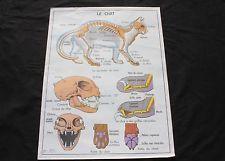 L769 Poster scolaire ecole vintage Chat Porc Cochon elevage MDI 91*65,5 cm